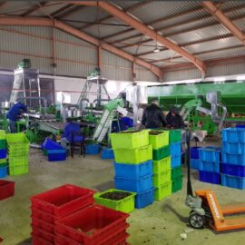 automatic cashew processing plant 10 tpd